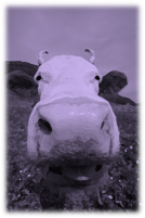 Purple Cow 2
