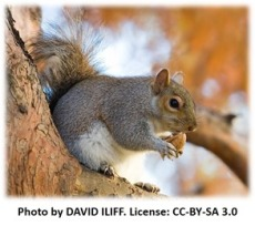 Acorn Eating Squirrel