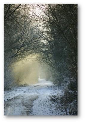 Snowfall and Road