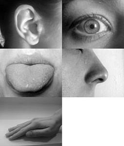 Five Senses - Creative Commons lic. Allan-Hermann Pool